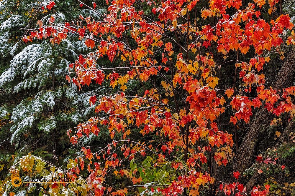 Fall color on the Keweenaw Peninsula in the Upper Peninsula of Michigan, USA