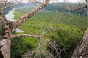 A platform built at the top of a giant Kapok tree in the Manu National Park Reserve Zone, Peru, provides views over an oxbow lake and dense jungle.