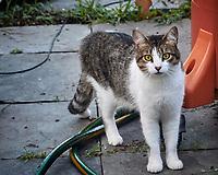 Neighborhood Cat lurking below the birdfeeder. Image taken with a Nikon N1V3 camera and 70-300 mm VR lens