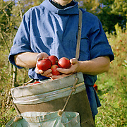 Father Rainer Verborg holding apples he has just picked at Ampleforth Abbey Orchard, Ampleforth, North Yorkshire.