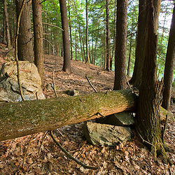 A forest scene at Highland Farm in York, Maine.