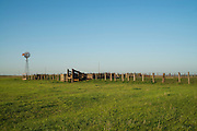 Cattle pens in western Oklahoma