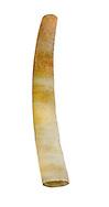 Tusk Shell - Entalis vulgare