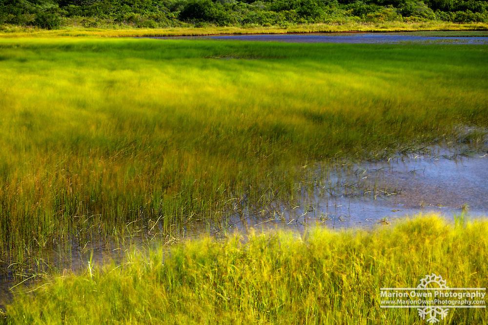 Gusty wind blows through grasses like waves at Lake Rose Teed, Kodiak, Alaska