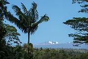 Scientific Observatories far atop Mauna Kea can be seen from Akaka Falls State Park. Kolekole Stream flows from Mauna Kea to form the impressive 422-foot-high Akaka Falls near Honomu, on the Big Island, Hawaii, USA. Walk a short loop trail of 0.4 miles to see several waterfalls in a beautiful tropical landscape.