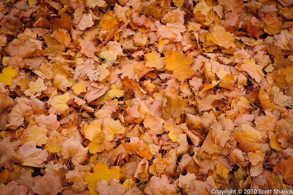Fallen leaves fill the ground in autumn. Missoula Photographer, Missoula Photographers, Montana Pictures, Montana Photos, Photos of Montana