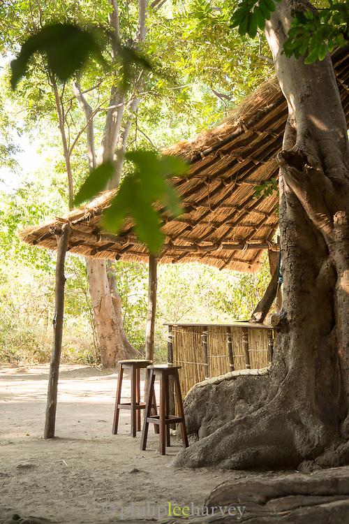 Bar and tree at Chikoko Tree Camp, South Luangwa National Park, Zambia