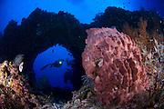 A diver looks on at a giant barrel sponge (Xestospongia testudinaria) through an archway, Father reefs, Kimbe bay