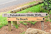 New Zealand, North Island, Auckland pohutukawa glade walk