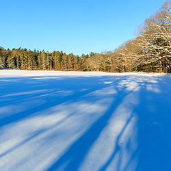 Shadows on fresh snow in a field at the Julia Bird Reservation in Ipswich, Massachusetts. Winter.