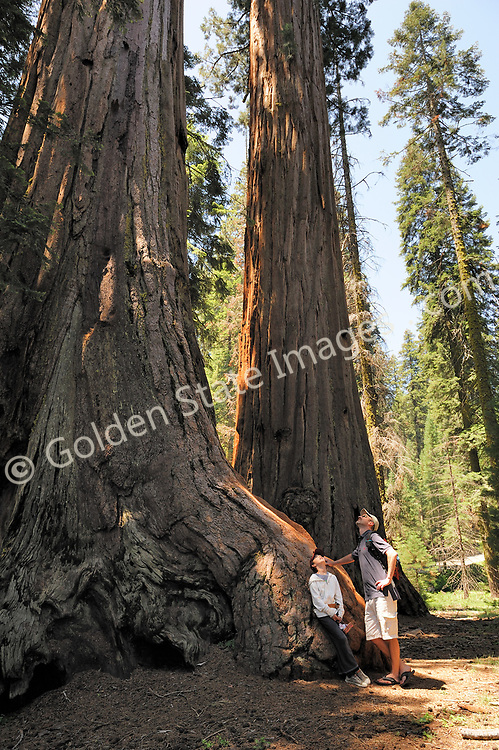 Father and daughter enjoy the shade and take in the sheer scale of the trees. (Not Model Released)    <br /> <br /> Species: Sequoiadendron giganteum