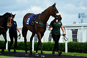 Choral Evensong ridden by George Downing and trained by Seamus Mullins in the visitbath.co.uk Nursery Handicap - Mandatory by-line: Ryan Hiscott/JMP - 19/08/20 - HORSE RACING - Bath Racecourse - Bath, England - Bath Races