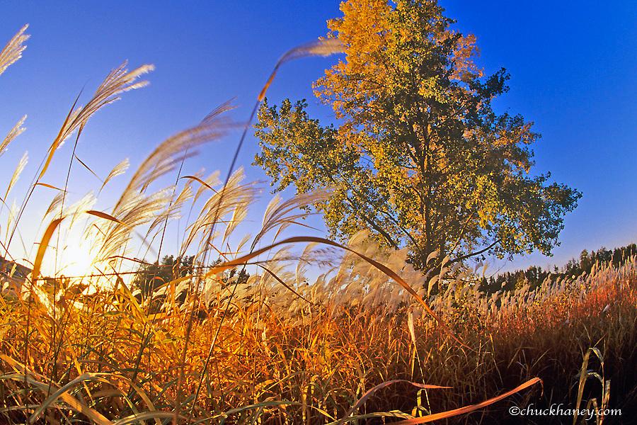 Tallgrass prairie near Brainerd Minnesota