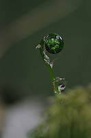 Ferns do not have either seeds or flowers (they reproduce via spores)...