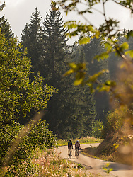 Two men riding racing bicycle on cycling tour in Black Forest, Baden-Wuerttemberg, Germany