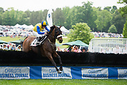 April 29, 2017, 22nd annual Queen's Cup Steeplechase. MR. LICKETY