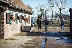 Boelens Jan en Peter<br /> Fokkerij De Vrombautshoeve - Lembeke 2014<br /> © Dirk Caremans