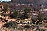 USA, Utah, Zion National Park, sandstone formation on east side of park