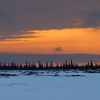 A sunset glows over a taiga forest, where spruce and birch grow by streams that wander across the tundra of far northern Russia.