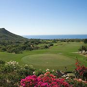 Bouganvilea flowers in Cabo Real Golf course. Cabo San Lucas, BCS.Mexico