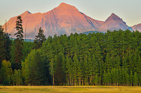 Rainbow Peak lights up before sunset beyond a grove of aspen trees. This view is from the north side of Glacier National Park, near Polebridge.