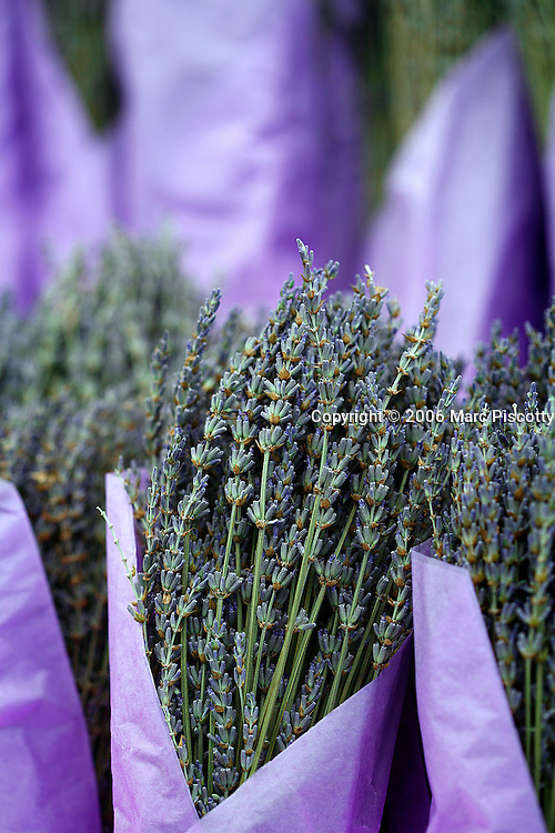 SHOT 10/23/2007 - Lavender bunches for sale at the Ferry Building Farmer's Market in San Francisco, Ca. In 2004, the building reopened as an upscale gourmet marketplace, office building, and re-dedicated ferry terminal. The restoration project spanned several years, with an emphasis on recreating the building's 1898 ambience. San Francisco's largest farmers market is held there on Tuesday and Saturdays. The City and County of San Francisco is the fourth most populous city in California and the fourteenth-most populous in the United States. San Francisco is a popular international tourist destination renowned for its steep rolling hills, an eclectic mix of Victorian and modern architecture, its large LGBT (lesbian, gay, bisexual, and transgender) population, and its chilly summer fog and mild winters. The Lavenders Lavandula are a genus of about 25-30 species of flowering plants in the mint family, Lamiaceae, native from the Mediterranean region south to tropical Africa and to the southeast regions of India. Lavenders are widely grown in gardens. Flower spikes are used for dried flower arrangements. The fragrant, pale purple flowers and flower buds are used in potpourris. Dried and sealed in pouches, they are placed among stored items of clothing to give a fresh fragrance and as a deterrent to moths. The plant is also grown commercially for extraction of lavender oil from the flowers. This oil is used as an antiseptic and for aromatherapy. French chefs in and around Provence, France have been incorporating this herb into their cuisine for many centuries. Lavender lends a floral, slightly sweet and elegant flavour to most dishes..(Photo by Marc Piscotty © 2007)