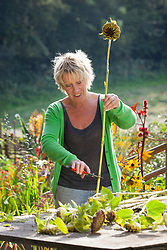 Carol Klein collecting seed from sunflowers