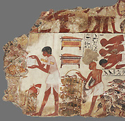 Nebamun viewing his geese and cattle.  These paintings are parts of a wall showing Nebamun inspecting geese and cattle.  He watches as farmers bring the animals to him while his scribes record the number of animals for him.