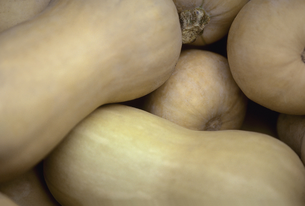 Close up selective focus photograph of a group of Butternut Squash
