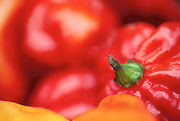 Close up selective focus photograph of very hot Red Scotch Bonnet peppers