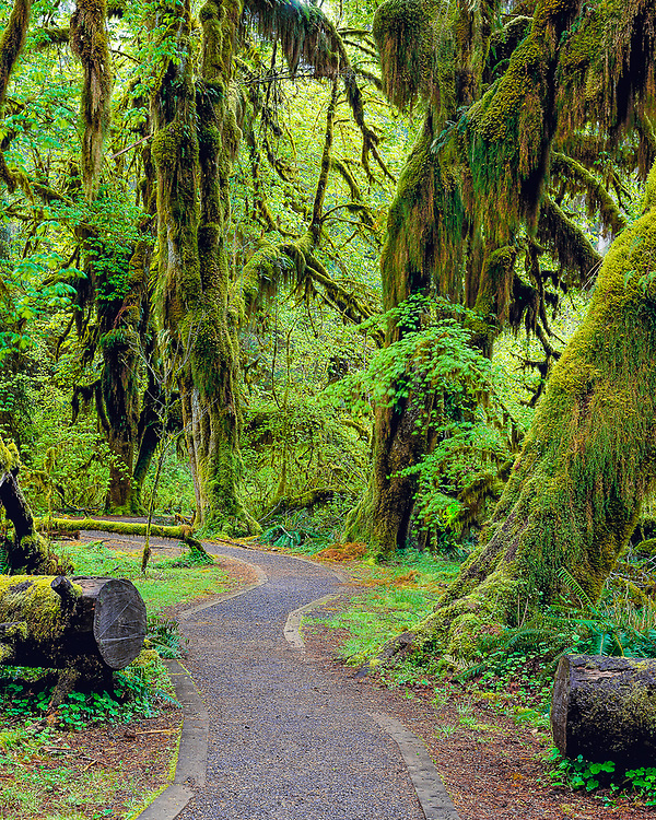 Hall of Mosses, Hoh Rain Forest, spring, Olympic National Park, Washington, USA