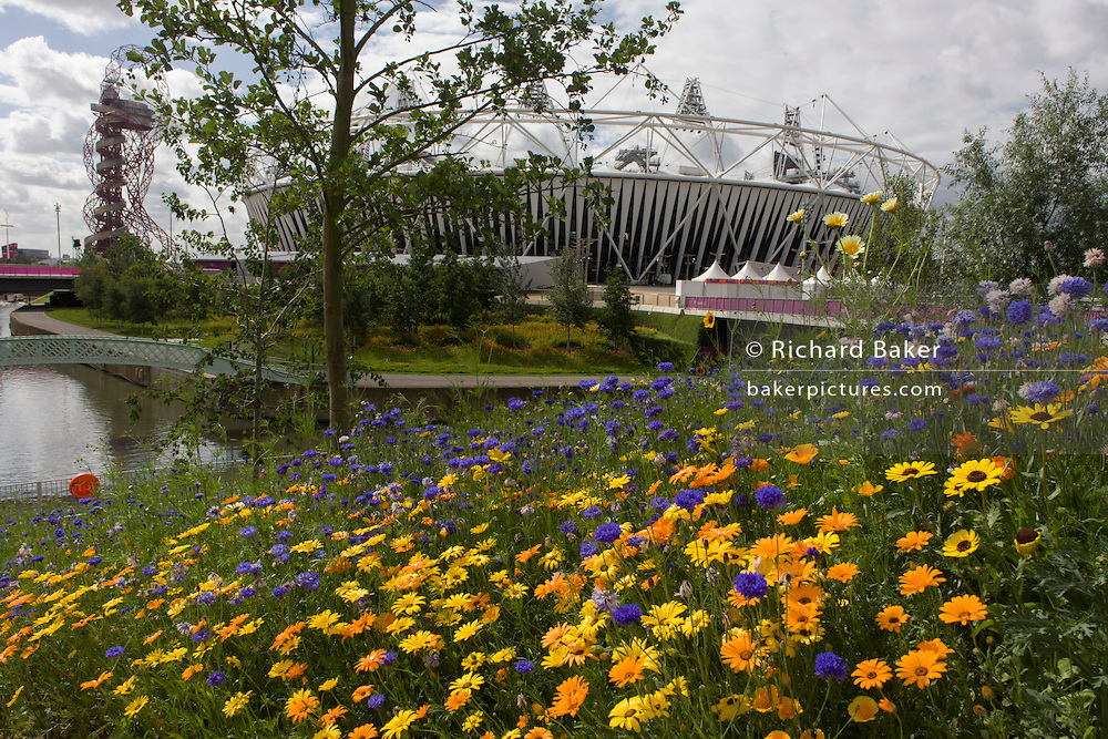 Known as the Ribbon of Gold, 7 annual species of English garden flowers created by 100 staff with the main Olympic stadium in the background during the London 2012 Olympics. London's Olympic Park, at just under a square mile, is the largest new park in the city for more than 100 years. The planting of 4,000 trees, 300,000 wetland plants and more than 150,000 perennial plants plus  nectar-rich wildflower make for a colourful setting for the Games. This land was transformed to become a 2.5 Sq Km sporting complex, once industrial businesses and now the venue of eight venues including the main arena, Aquatics Centre and Velodrome plus the athletes' Olympic Village. After the Olympics, the park is to be known as Queen Elizabeth Olympic Park.