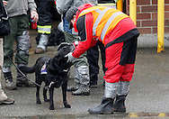 A rescue worker pets a therapy dog at the Oso fire station before a moment of silence for those lost in the mudsilde exactly one week ago in Oso, Washington March 29, 2014.  Family and friends of 90 people still missing after a wall of mud flattened the outskirts of a rural Washington state town increasingly feared for the worst on Saturday as the governor called for a statewide moment of silence a week after the disaster. REUTERS/Rick Wilking(UNITED STATES)