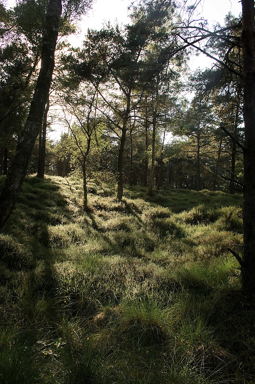 Nederland, Heerde, 20 sept 2006.De Dellen, voormalig militair oefenterrein en schietterrein..Diverse landschappen, bos, heide, bomen...Foto: (c) Michiel Wijnbergh