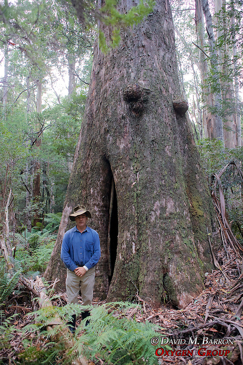 David Lindenmayer In Front Of Hollow Tree