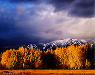 Late light on aspen trees with storm clouds and Big Mountain in Whitefish, Montana, USA