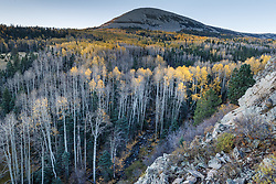 Aspens in fall color on Elk Creek below Ash Mountain, Vermejo Park Ranch, New Mexico, USA.