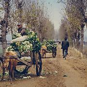 Dans la campagne, les routes ne sont pas goudronnées et les transport se font, dans le meilleur des cas, sur des charettes.