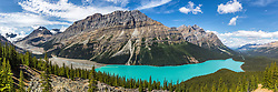 Peyto Lake and Mount Caldron towering above. Mount Patterson is too the right of Mount Caldron. The steady supply of glacial flour from the melting glaciers above create the crazy cyan color of Peyto Lake. <br /> <br /> A large format panorama image of Peyto Lake in Banff National Park along the Icefields parkway, Alberta Canada.  Can be printed six foot wide at 175dpi. 150 megabytes.