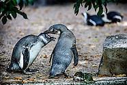 Homoseksualiteit in het dierenrijk