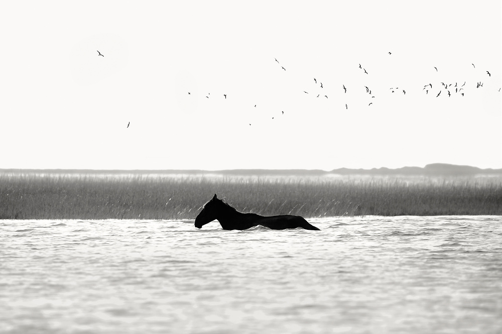 """""""I Do not understand the mystery of grace - only that it meets us where we are but does not leave us where it found us"""" <br />      ~ Anne Lamott <br /> <br /> Tracie Spence Fine Art Photography of the Spanish Wild Mustangs"""