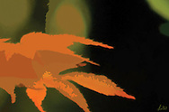 Abstract images of red leaves in a dark forrst in autumn.