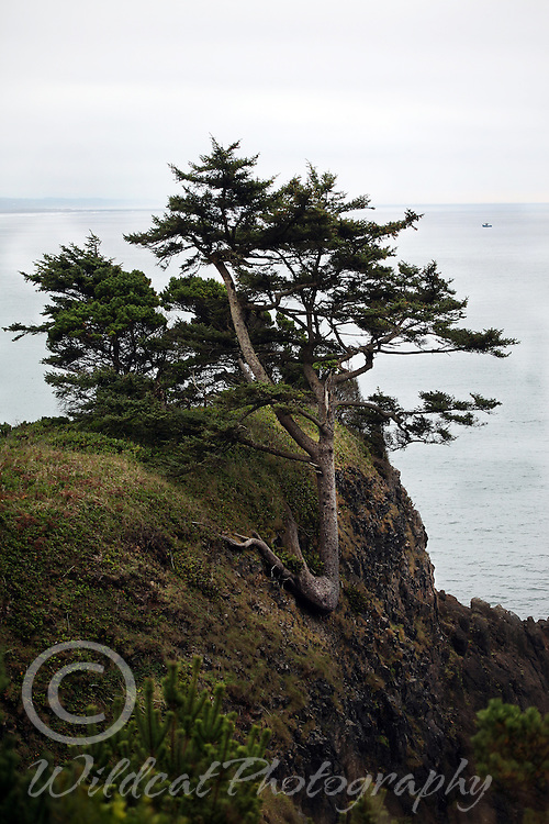 Tree growing on side of cliff