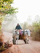 A man on a cart pulled by two cows down a dirt track in rural Cambodia