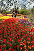 Cincinnati Zoo Blooms