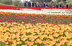 April 28, 2018 - Qinhuangdao, Qinhuangdao, China - Qinhuangdao, CHINA-28th April 2018: The tulip exhibition is held at Xinshiji Park in Qinhuangdao, north China's Hebei Province, featuring 130,000 tulips. (Credit Image: © SIPA Asia via ZUMA Wire)