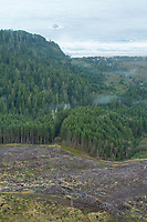 Clearcut, industrial forest and old growth near Arch Cape, Oregon.