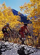 Larry W. Peterson and Neil Kodner peddling carbon fiber road bikes on the Alpine Loop, slopes of Mount Timpanogos, Uinta National Forest, Utah.