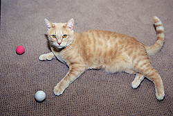 Cat Playing With Balls