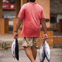 Fare, Huahine, French Polynesia, tuna fish at open market
